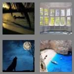 4 pics 1 word 3 letters bay