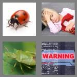 4 pics 1 word 3 letters bug