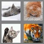 4 pics 1 word 3 letters cat