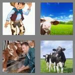 4 pics 1 word 3 letters cow