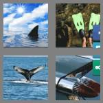 4 pics 1 word 3 letters fin