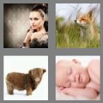 4 pics 1 word 3 letters fur