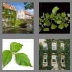 4 pics 1 word 3 letters ivy