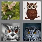 4 pics 1 word 3 letters owl