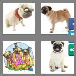 4 pics 1 word 3 letters pug