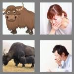 4 pics 1 word 3 letters yak