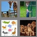 4 pics 1 word 3 letters zoo