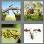 4 pics 1 word 4 letters ants