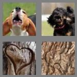 4 pics 1 word 4 letters bark