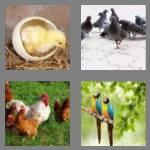 4 pics 1 word 4 letters bird