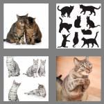 4 pics 1 word 4 letters cats