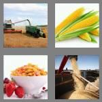 4 pics 1 word 4 letters corn