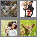 4 pics 1 word 4 letters fawn