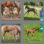 4 pics 1 word 4 letters foal