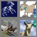 4 pics 1 word 4 letters goat