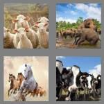 4 pics 1 word 4 letters herd
