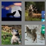 4 pics 1 word 4 letters howl
