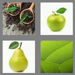 4 pics 1 word 4 letters leaf