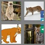 4 pics 1 word 4 letters lynx