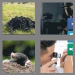 4 pics 1 word 4 letters mole