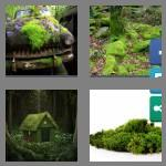 4 pics 1 word 4 letters moss