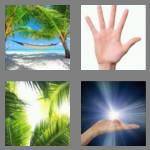 4 pics 1 word 4 letters palm