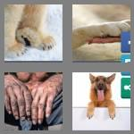 4 pics 1 word 4 letters paws