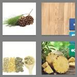 4 pics 1 word 4 letters pine