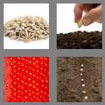 4 pics 1 word 4 letters seed