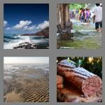 4 pics 1 word 4 letters tide