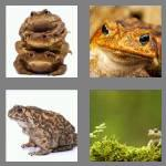 4 pics 1 word 4 letters toad