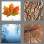 4 pics 1 word 4 letters tree