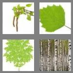 4 pics 1 word 5 letters birch