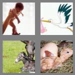 4 pics 1 word 5 letters birth