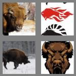 4 pics 1 word 5 letters bison