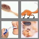 4 pics 1 word 5 letters brush
