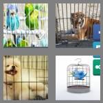 4 pics 1 word 5 letters caged