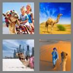 4 pics 1 word 5 letters camel