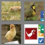 4 pics 1 word 5 letters chirp