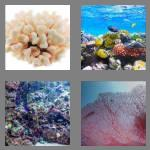 4 pics 1 word 5 letters coral
