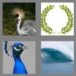 4 pics 1 word 5 letters crest