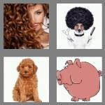 4 pics 1 word 5 letters curly