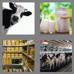 4 pics 1 word 5 letters dairy