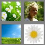 4 pics 1 word 5 letters daisy