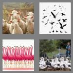 4 pics 1 word 5 letters flock