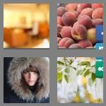 4 pics 1 word 5 letters fuzzy