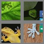 4 pics 1 word 5 letters gecko