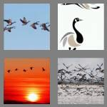 4 pics 1 word 5 letters geese