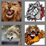 4 pics 1 word 5 letters growl