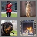 4 pics 1 word 5 letters guard